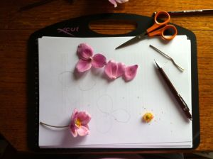 anemone plus desk